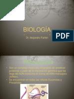 Ribosomas, Centriolos, Mitosis