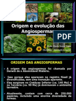 Origem e evolução das Angiospermas