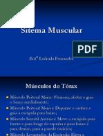 Sitema Muscular 1.ppt