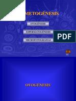 01-gametogénesis