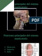 . Funciones Principales Del Sistema Masticatorio