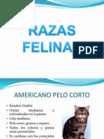 CAninos y Felinos 2