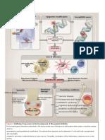 Patogenesis RA SKEMA