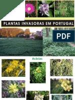 Plantas Invasoras Portugal