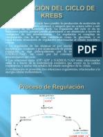 REGULACI+ôN DEL CICLO DE KREBS