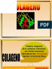 Colageno y Elastina Profe
