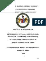 PROYECTO  ALCACHOFA