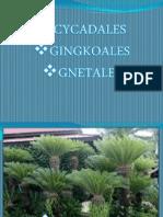 Botanica Forestal