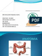 anatomia colon.ppt