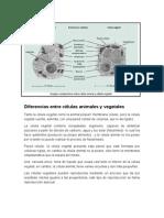 Diferencias entre células animales y vegetales