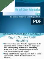 Medaka Egg Story