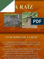 LA RAÍZ2
