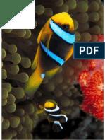 Marine Wildlife Animals 613 61