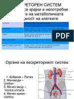Екскреторен систем