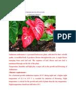 Anthurium Cultivation