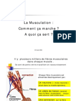 2006_Theorie_Musculation