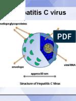 HCV - hepatitis c virus