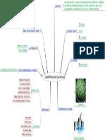 Competencias Educativas PDF