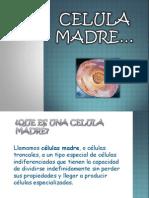 celulamadre-110517180659-phpapp02