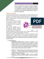 Tema 31. Leucocitos