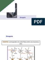 sinapsis.pptx