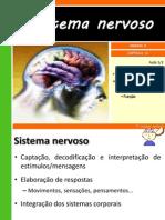 14-osistemanervoso-121109202225-phpapp01