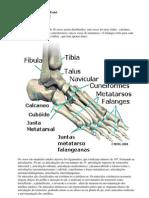 Estudando Reflexologia Podal-9ª Lição - Anatomia dos pés