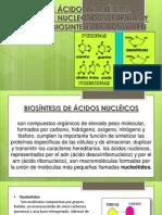 DIAPOS BIOSÍNTESIS DE ÁCIDOS NUCLÉICOS