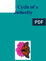 Lifecycle Butterfly