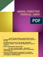 Mediul Forestier Tropical