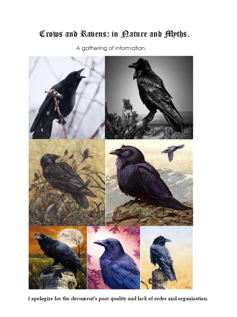 Crows and ravens mythology religion and belief biocorpaavc