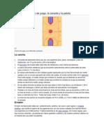 baloncesto y sus medidas.docx