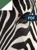 Hogyan kapta csikjait a zebra