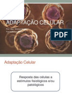 AULA 2 - Adaptação celular
