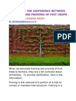 Know the Difference Between Training and Pruning of Fuit Crops