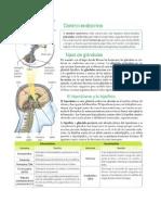 8 3P L Sistema Endocrino