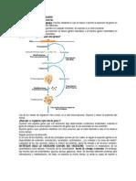 operon-lac1.doc