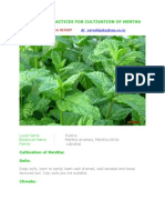 Desirable Practices for Cultivation of Mentha