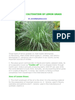 Economic Cultivation of Lemon Grass