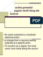 The Action Potential Propagates Itself Along the Neuron