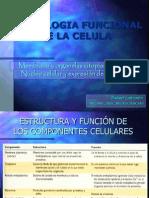 aMorfologíaFuncCélula