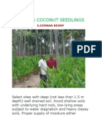 Planting Coconut Seedlings