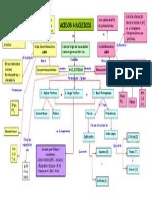Mapa Conceptual ácidos Núcleicos