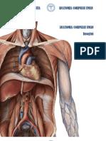 134179235 Anatomia Corpului Uman Toteanu Cristina