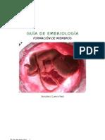 Guía de embriología. Formación de extremidades.