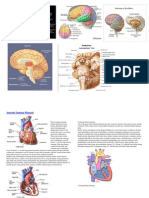otak jantung