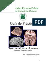 Guia de Neuroanatomia URP - Dr. Enriquez