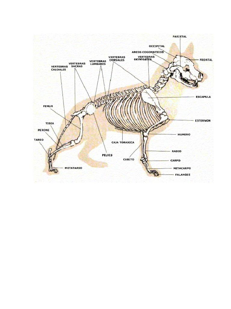 Adiestramiento Basico y Anatomia Del Perro