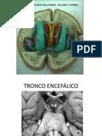 Cerebro Diencefalo II