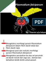 SEM2 MALARIA Plasmodium Falciparum 2013